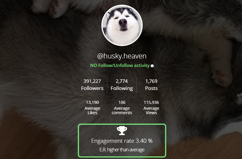 ninjanalytics screenshot - instagram influencer marketing for ecommerce